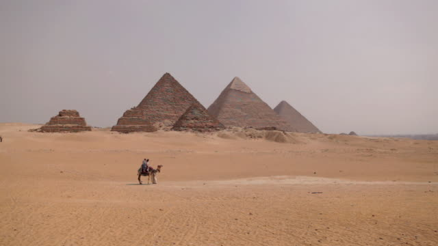 MS Shot of camel pyramids / Giza, Egypt