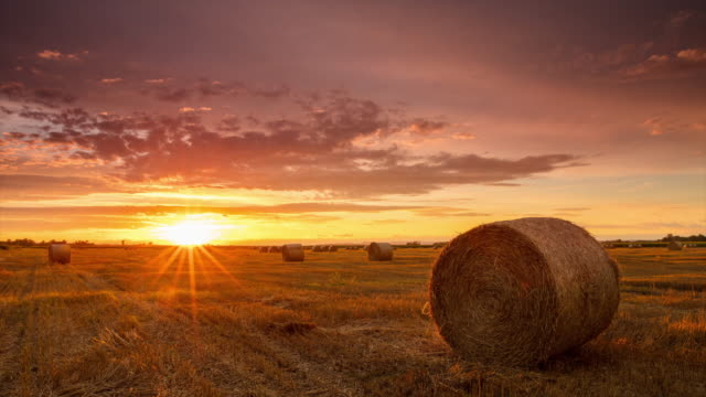 t/l 8k shot of candid sunrise over field of bales - hay field stock videos & royalty-free footage
