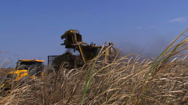 cu tu shot of cane to harvester / queensland, australia - sugar cane stock videos and b-roll footage