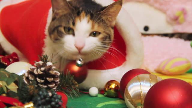 cu shot of cat dressed up like santa claus / seoul, south korea - christmas stock videos & royalty-free footage