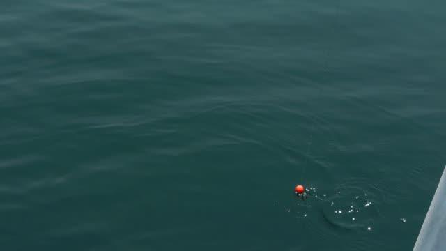 stockvideo's en b-roll-footage met shot of catching fishes - vier dingen