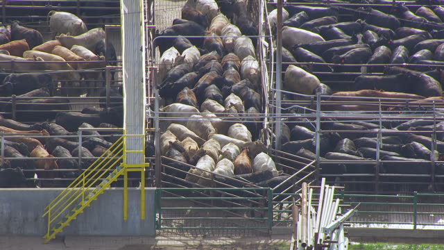 ms aerial shot of cattle in pens / nebraska, united states - slaughterhouse stock videos & royalty-free footage