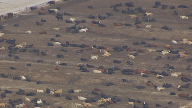 MS AERIAL Shot of Cattle sitting at feedlot / Nebraska, United States