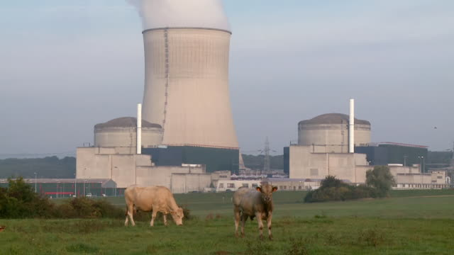 ws shot of cattles grazing in front of atomic power plant cattenom / cattenom, lorraine, france - atomkraftwerk stock-videos und b-roll-filmmaterial