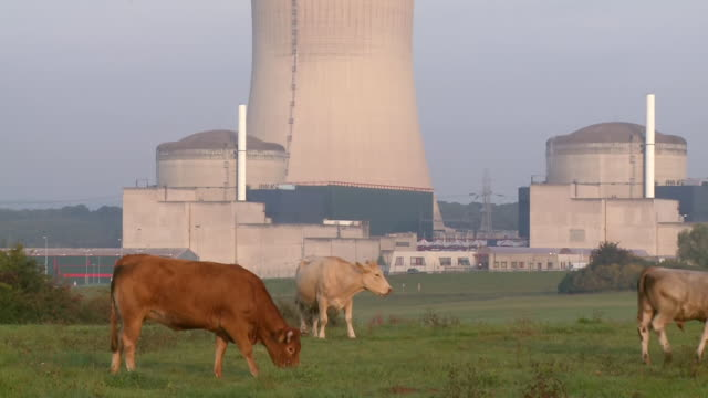 ms zo shot of cattles grazing in front of atomic power plant cattenom / cattenom, lorraine, france - atomkraftwerk stock-videos und b-roll-filmmaterial