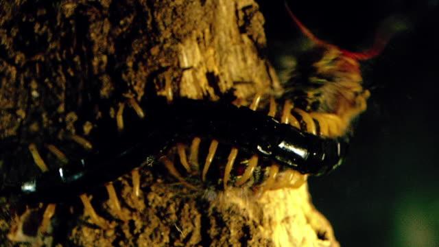 shot of centipede - hundertfüßer stock-videos und b-roll-filmmaterial