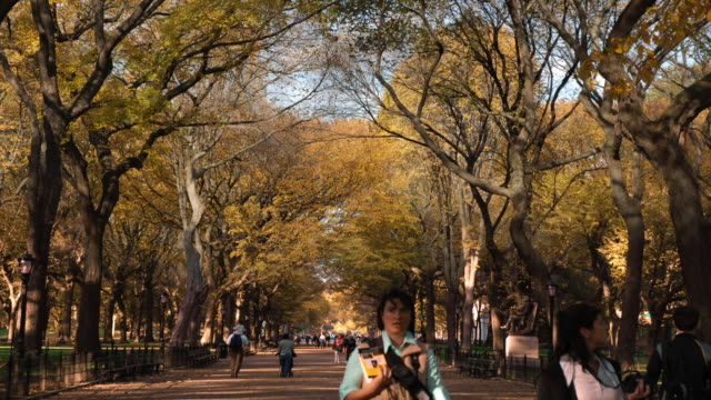 ms t/l shot of changing seasons at mall in central park / new york, united states - le quattro stagioni video stock e b–roll