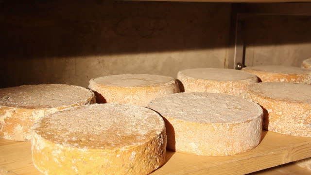 MS Shot of Cheese blocks about one month old are lined upon shelf and aging in cellar / Lenggries, Bavaria, Germany