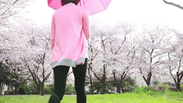 vidéos et rushes de shot of cherry blossoms are in full bloom and woman wearing pink cardigan is walking with pink umbrella - cardigan