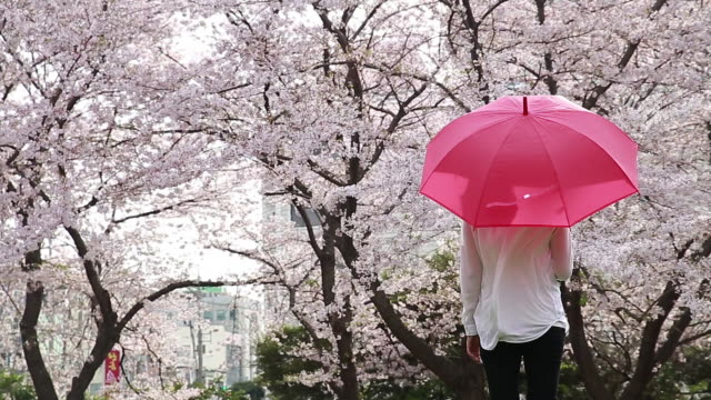 shot of cherry blossoms are in full bloom and woman wearing pink cardigan is standing with pink umbrella - korea stock videos & royalty-free footage