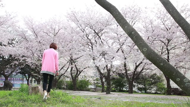vidéos et rushes de shot of cherry blossoms are in full bloom and woman wearing pink cardigan is walking and seating in an tree stump and looking around and calling with mobile phone - cardigan