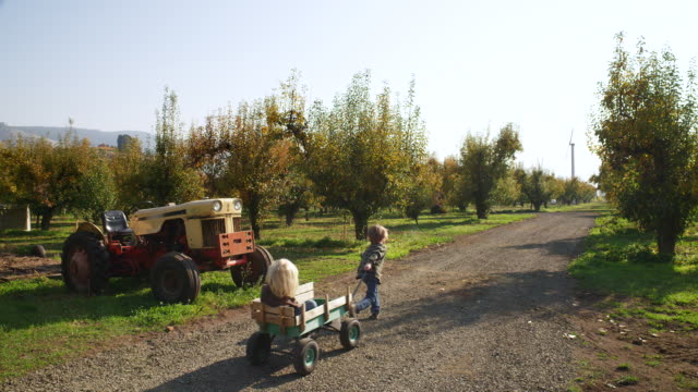 WS SLO MO Shot of child pulling his younger brother in wagon as they head down road on orchard farm, passing vintage tractor / Hood River, Oregon, United States