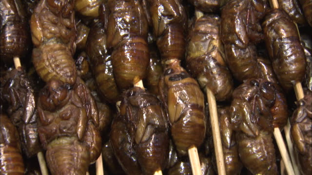 shot of cicada skewers at a night market in kaifeng, china - insect stock videos & royalty-free footage