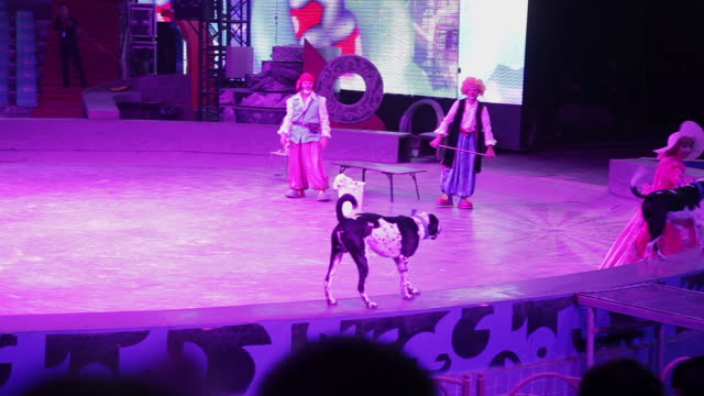 ms ts shot of circus performer performing with dogs in big top / xian, shaanxi, china  - circus stock videos & royalty-free footage