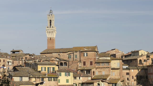 ms shot of city view with torre del mangia / siena, tuscany, italy - gruppo medio di animali video stock e b–roll