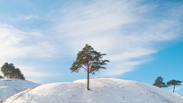 ms t/l shot of cloud flitted across trees / pyeongchang, gangwondo, south korea - pyeongchang stock videos and b-roll footage