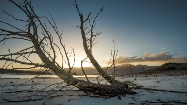 ws t/l shot of clouds move in over drowned forest lake / villiersdorp, western cape, south africa - 流木点の映像素材/bロール