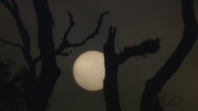 ms la shot of clouds moving fast in front of full moon seen through leafless tree branches / mae sai, chiang rai, thailand - kontur stock-videos und b-roll-filmmaterial