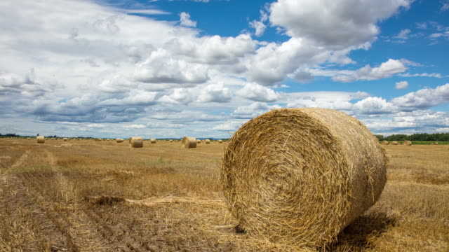 t/l 8k shot of cloudscape over field of bales - hay bail stock videos & royalty-free footage