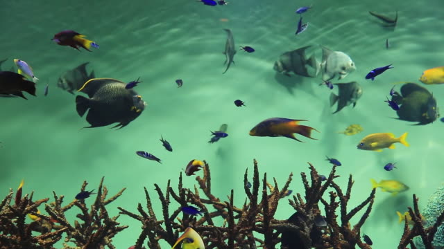 ms shot of colorful fishes swimming around corals / kasai, tokyo, japan - 水族館点の映像素材/bロール