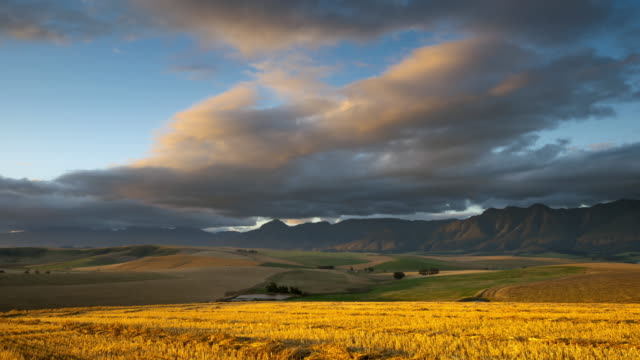vidéos et rushes de ws t/l shot of colorfull sunset showing patchwork wheat farms of ripening wheat / greyson, western cape, south africa - patchwork landscape