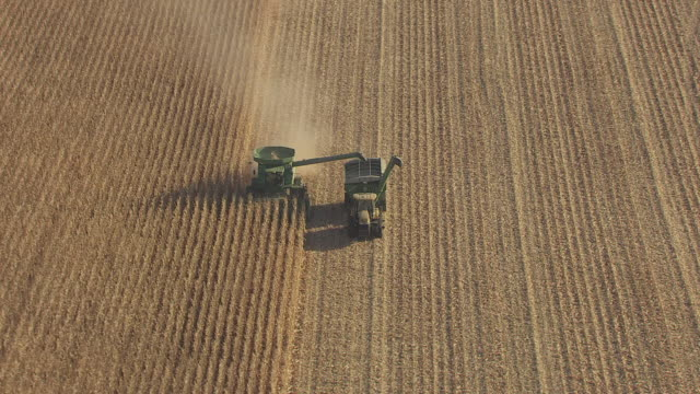 MS AERIAL ZI Shot of combine and harvester in corn field in Murray County / Minnesota, United States