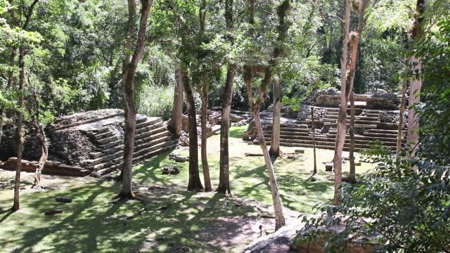 MS Shot of copan surrounding by trees / Copan, Honduras