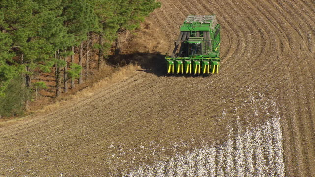 ms shot of cotton stripper in cotton field / north carolina, united states - cotton plant stock videos and b-roll footage