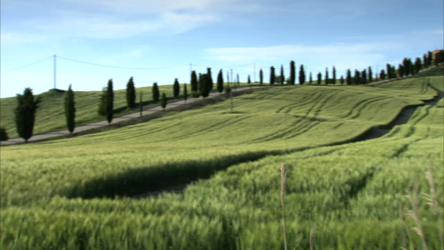 ms pan shot of country road in tuscan countryside / siena, tuscany, italia - collina video stock e b–roll