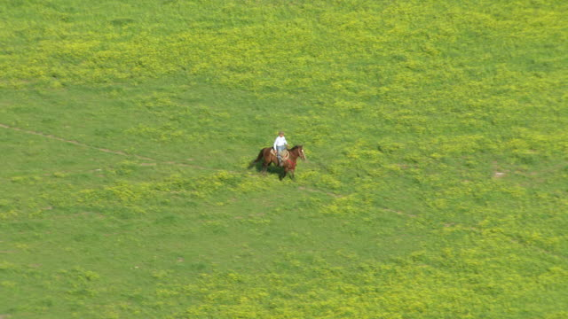 ws aerial ts shot of cowboy riding horse in field of yellow flowers /louisiana, united states - tierfarbe stock-videos und b-roll-filmmaterial