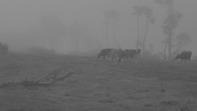 ms pan shot of cows at pasture and clothes hanging on line at countryside - medium group of animals stock videos & royalty-free footage