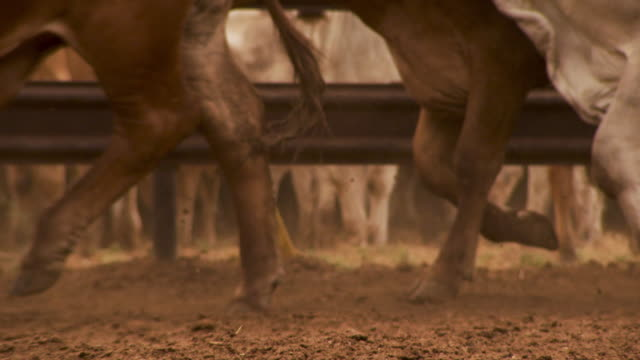 a shot of cows hooves. - cattle stock videos & royalty-free footage