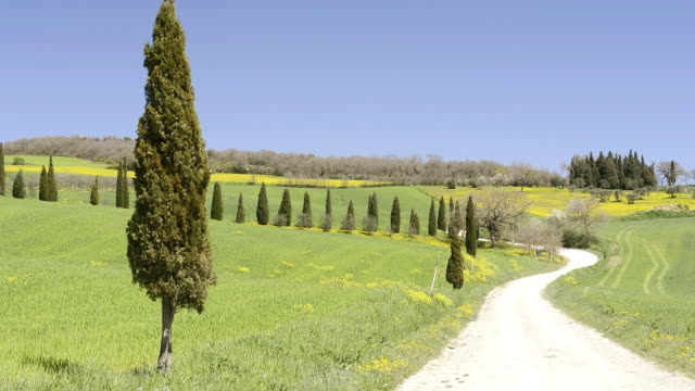 MS Shot of Cypress avenue on green Tuscany Hill with country road / Pienza, Tuscany, Italy