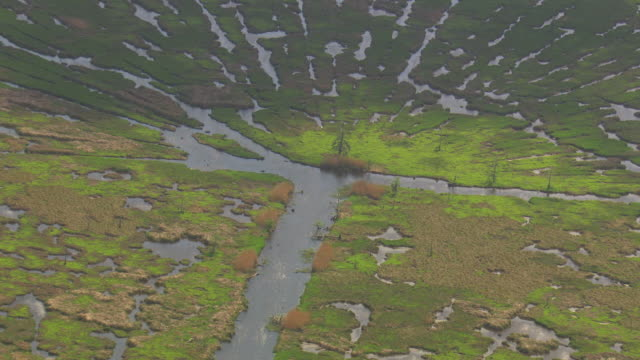CU AERIAL Shot of cypress scars of damage to land from removal of cypress trees from logging / Louisiana, United States