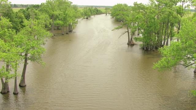 ms aerial shot of cypress trees in tallahatchie county / mississippi, united states - mississippi flod bildbanksvideor och videomaterial från bakom kulisserna
