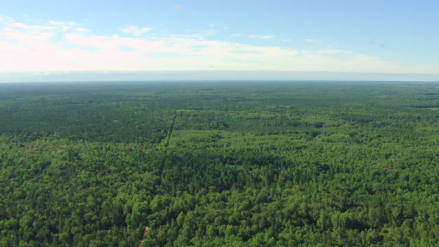 ws aerial shot of dense forests under sky in iosco county / michigan, united state - michigan stock videos & royalty-free footage
