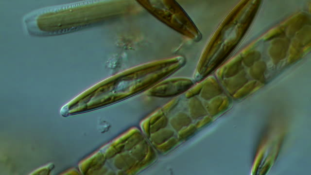 ecu pan shot of diatoms moving slowly forming algal mats (green algae) / newcastle emlyn, ceredigion, united kingdom - alge stock-videos und b-roll-filmmaterial