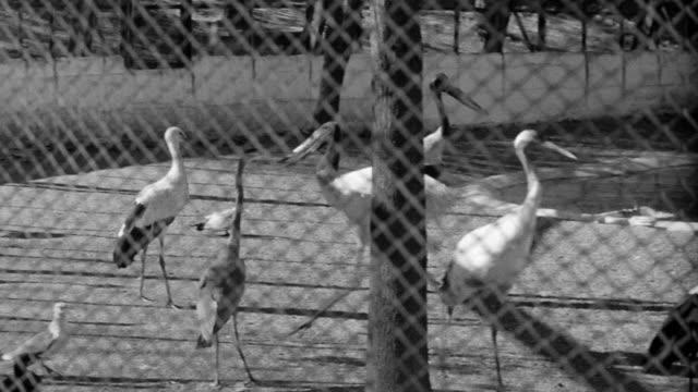 cu shot of different kinds of birds throughout cage in saint louis zoological park at missouri  - saint louis bildbanksvideor och videomaterial från bakom kulisserna