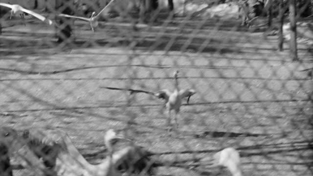 cu ts shot of different kinds of birds throughout cage in saint louis zoological park at missouri  - saint louis bildbanksvideor och videomaterial från bakom kulisserna