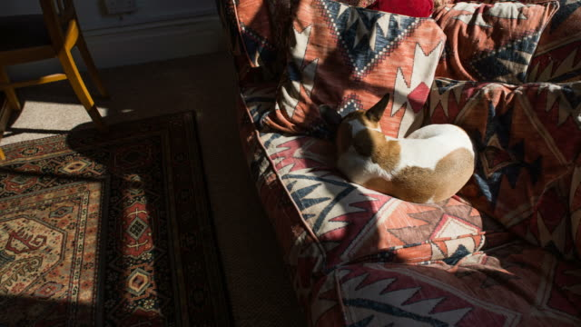 ms t/l shot of dog resting and sleeping on couch in sun as shadows moving across frame / london, greater london, united kingdom - greater london stock videos & royalty-free footage
