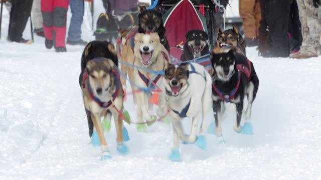 MS/SLOMO  shot of dog sled racing teams