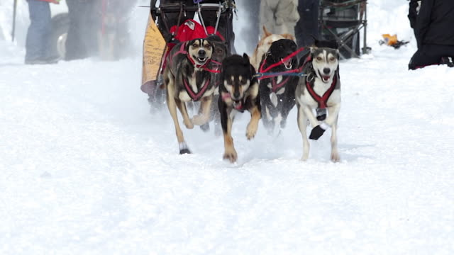 ms/slomo  shot of dog sled racing teams - jackson hole stock-videos und b-roll-filmmaterial
