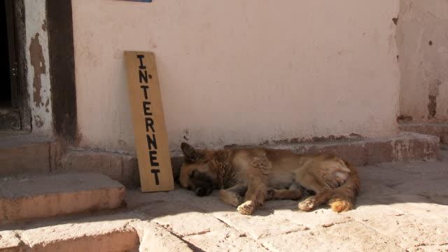 MS Shot of Dog sleeping by internet sign / San Pedro de Atacama, Norte Grande, Chile