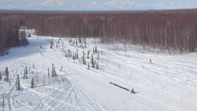 MS AERIAL ZO Shot of dogsled team racing on snowy trail during Iditarod Trail Sled Dog Race and team running and surrounding forest / Willow, Alaska, United States