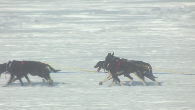 MS AERIAL TS Shot of dogsled team racing on trail during Iditarod Trail Sled Dog Race / Willow, Alaska, United States