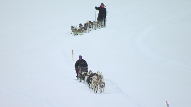vídeos de stock, filmes e b-roll de ws aerial shot of dogsled team racing through snow during iditarod trail dog sled race / alaska, united states - animal de trabalho