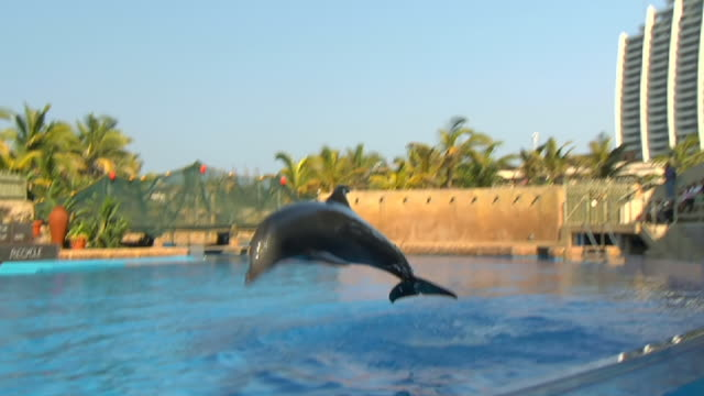 ms  slo mo shot of dolphin swimming and jumping in tank of water / durban, kwazulu-natal, south africa - captive animals bildbanksvideor och videomaterial från bakom kulisserna