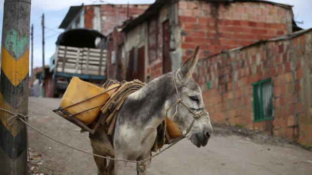 MS Shot of donkey standing with makeshift saddlebags in Ciudad Bolivar slum / Bogota, Colombia