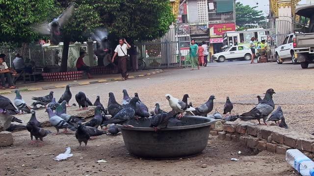 ms la shot of doves picking food on street / yangon, yangon division, myanmar  - washtub stock videos and b-roll footage