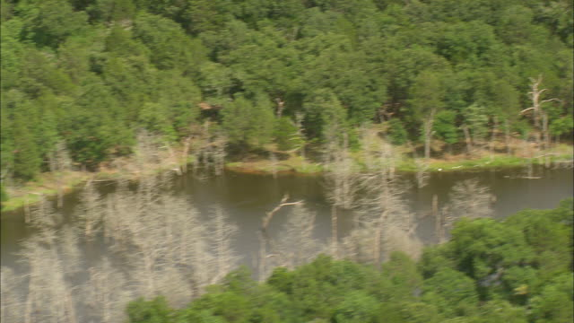 ws aerial zi shot of dry trees in small lake surrounded by trees / texas, united states - medium group of animals stock videos & royalty-free footage